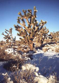 Snow in the Mojave???